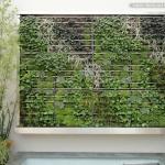 7 Grandes idées pour cultiver sur un petit balcon